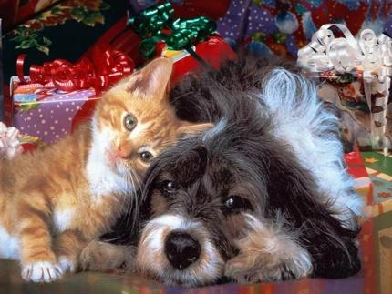 6 libri con cani e gatti da leggere e regalare a natale for Animali a natale