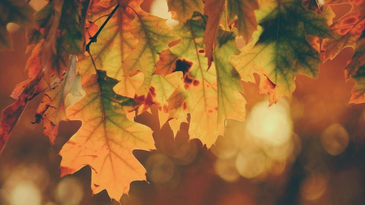 L'albero - Il Respiro degli Alberi