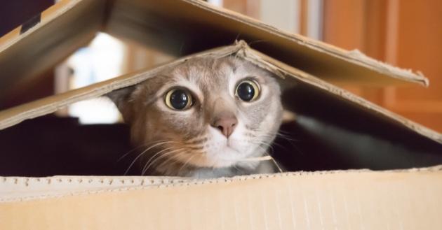 Giornata Mondiale Del Gatto 5 Libri Per Festeggiare Lamico Felino