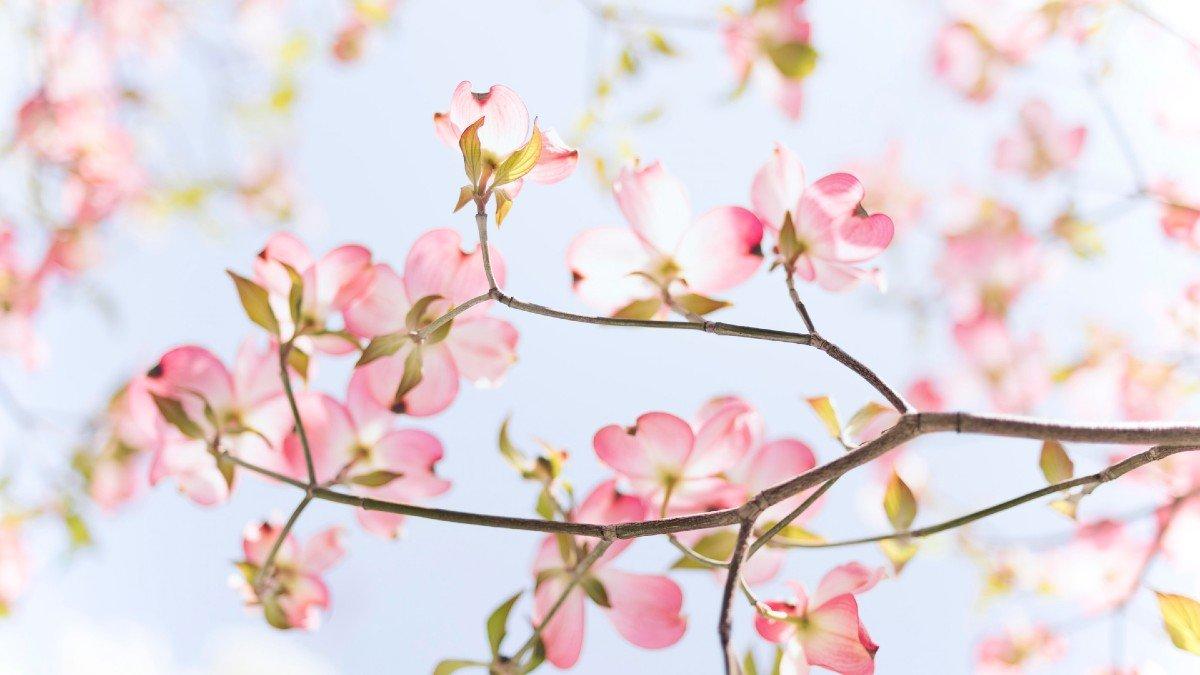 Frasi Sulla Primavera.Migliori Frasi Sulla Primavera Gli Aforismi Piu Belli Sulla Stagione
