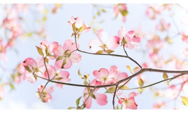 Le Piu Belle Frasi Sulla Primavera.Migliori Frasi Sulla Primavera Gli Aforismi Piu Belli Sulla Stagione